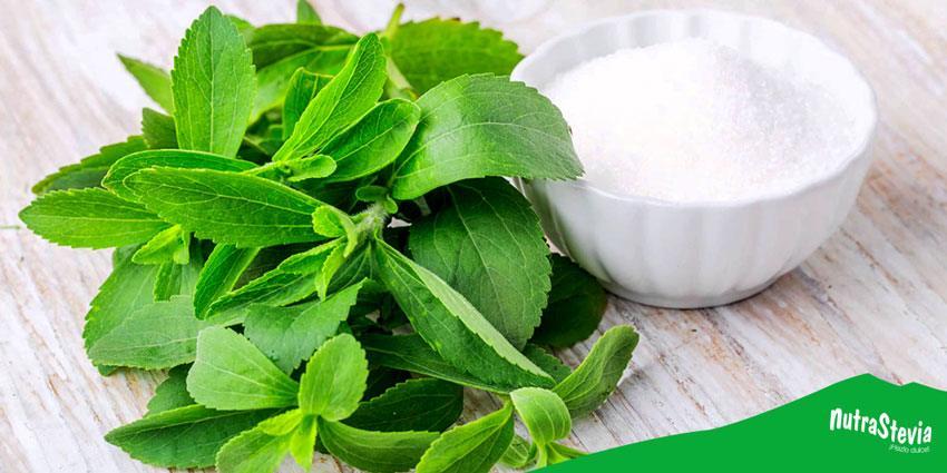 stevia educorante natural sin calorias