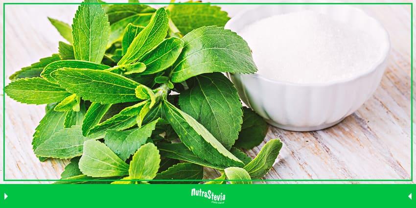 beneficios y bondades de la stevia