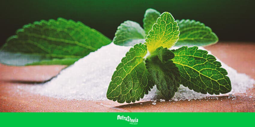 Stevia, edulcorante potente, saludable y sin calorías